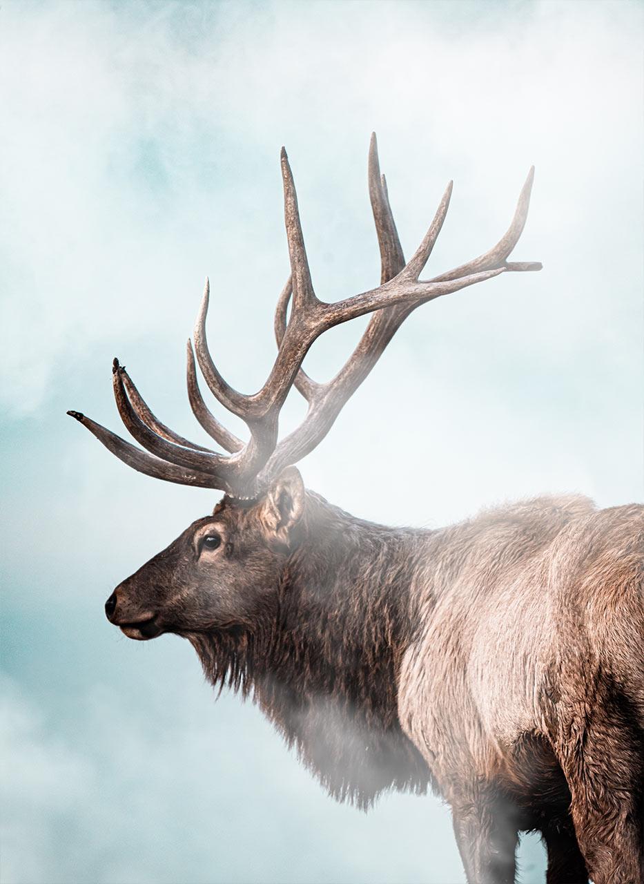 Largest Elk In The World Samsons Mountain Whitetail Deer