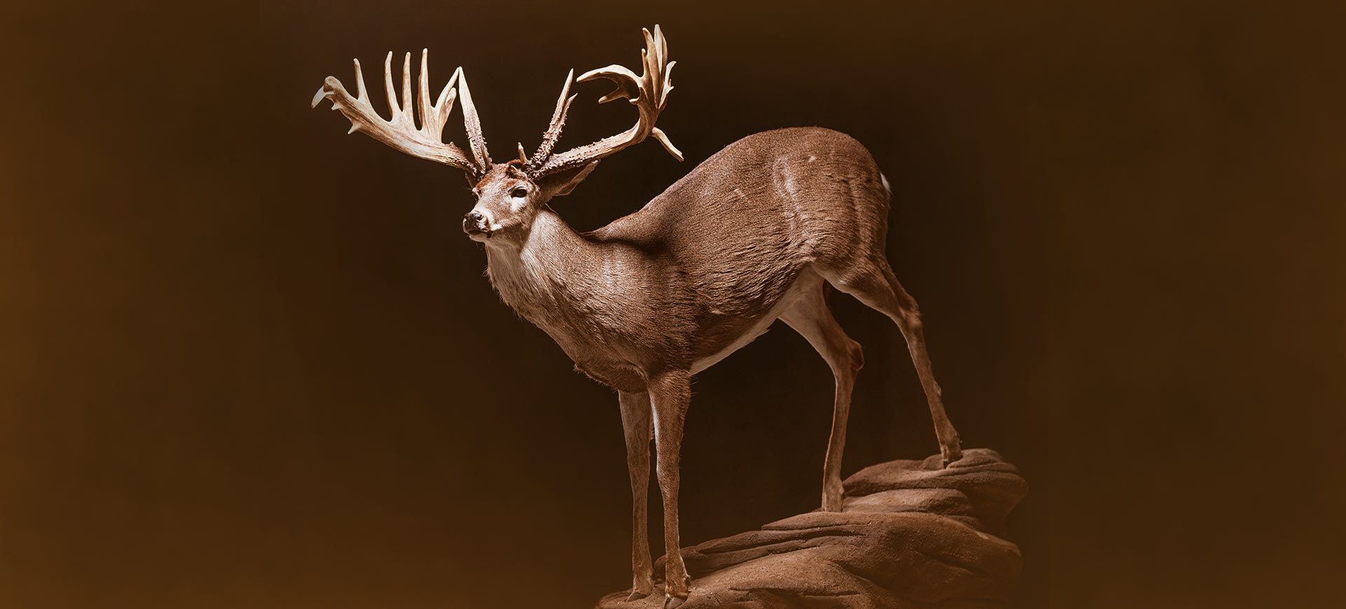 Large Full Body Mount Of A Whitetail Deer Samsons Mountain Whitetail Deer