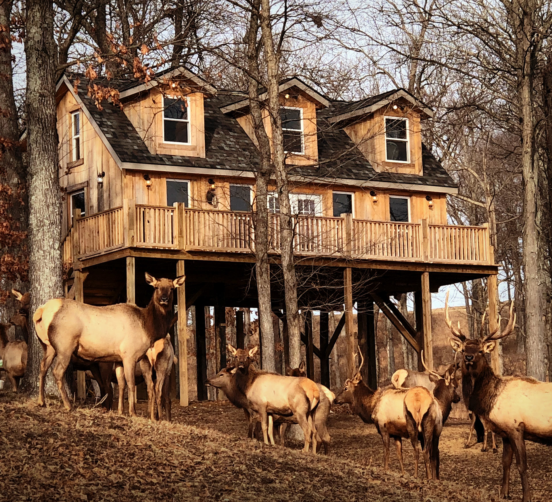 Hunting Cabin For Rent In Southern Illinois Samsons Mountain Whitetail Deer