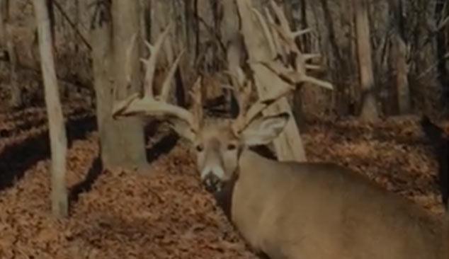 Large Whitetail Deer Rack Samsons Mountain Hunting Grounds